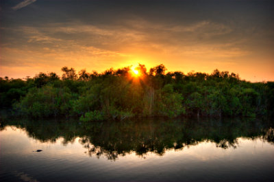 Picture of the Everglades, Florida