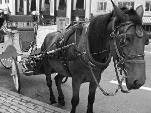 Horse and carriage rides in New York City's Central Park