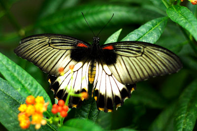 Superieur Photo Of Butterfly At The Botanical Garden ...