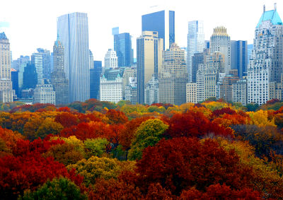 Photo of fall foliage in New York City's Central Park