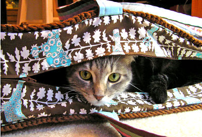 Photo of a cat in a bag