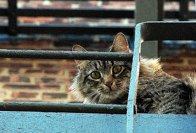 Photo of a New York City cat