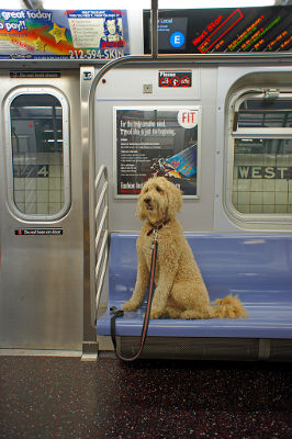 Photo of a dog on a New York City subway car